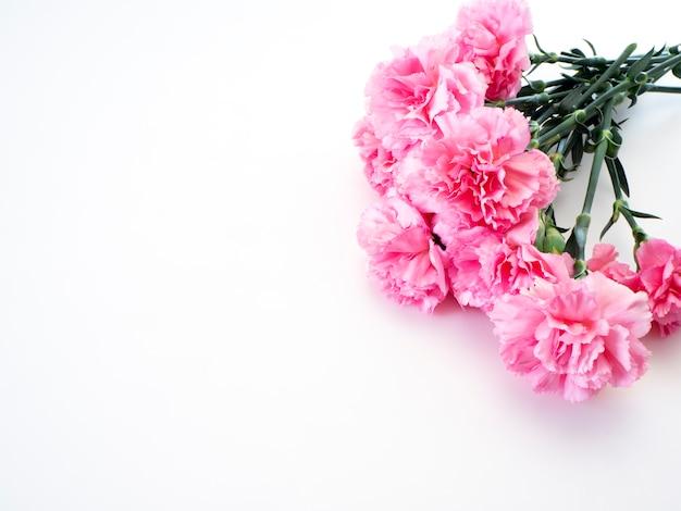 Różowy goździk kwiat na dzień matki
