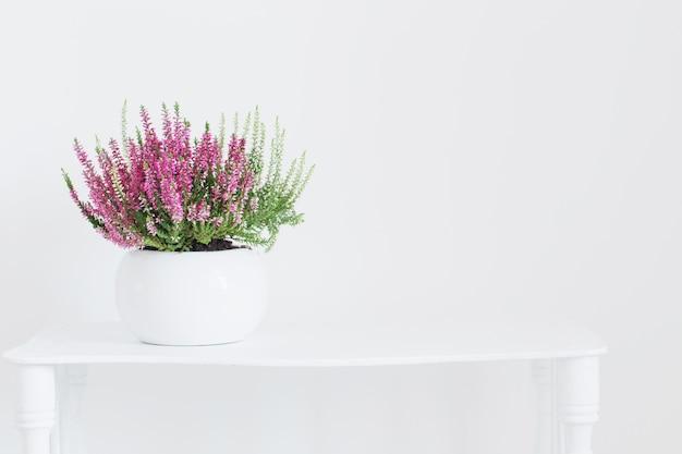 Różowy i biały wrzos w doniczce na białym tle