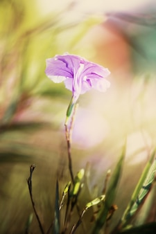 Różowy i fioletowy kwiat. nieostrość i tonacja vintage.