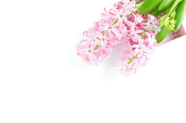 Różowy kwiat hiacynt na białym tle na leżał biały, płaski