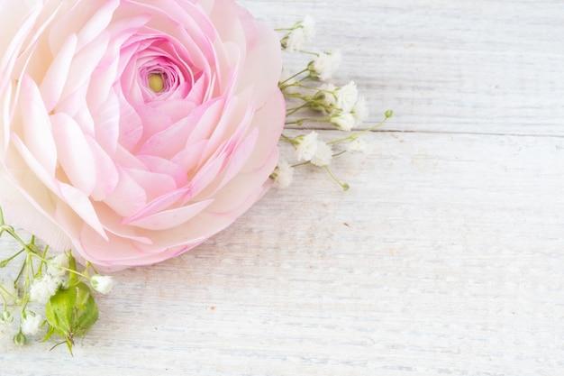 Różowy kwiat jaskier na drewnianym białym stole. zamknij i skopiuj miejsce.