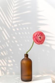 Różowy kwiat jaskier w wazonie butelkowym