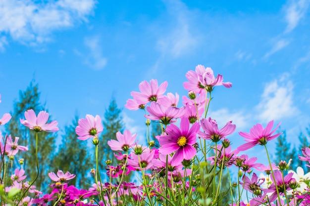 Różowy kwiat kwitnący w polu kwitnący w ogrodzie