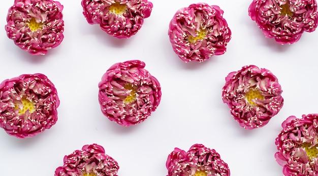Różowy kwiat lotosu na białym na białym tle. widok z góry