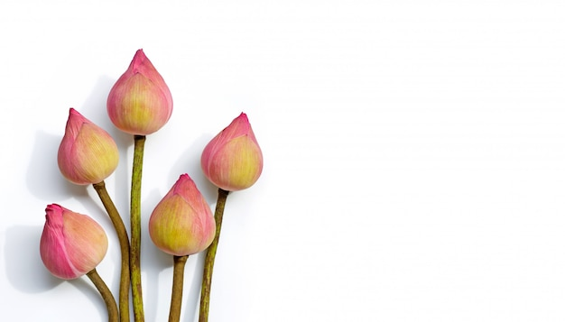 Różowy kwiat lotosu na białym tle. widok z góry z miejscem na kopię