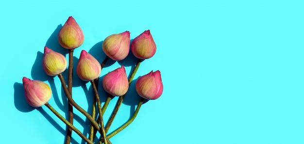 Różowy kwiat lotosu na niebieskim tle.