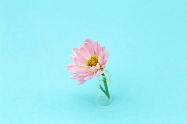 Różowy kwiat na kolorowym minimalnym tle. kreatywne tło kwiatowy. skopiuj miejsce