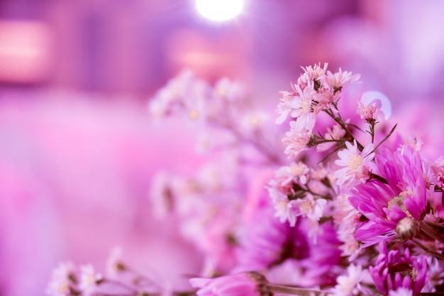 Różowy kwiat na tle piękno projekt na tle ślubu miłość