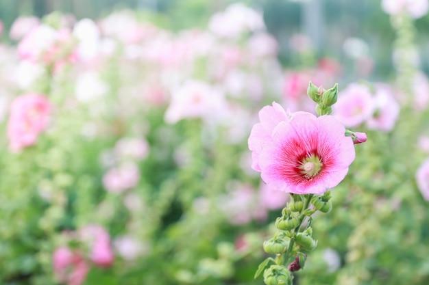 Różowy kwiat na zamazanym zieleni tle pod światłem słonecznym.