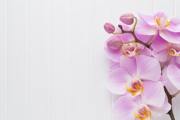 Różowy kwiat orchidei na białym tle drewna teksturowanej, miejsce na tekst.