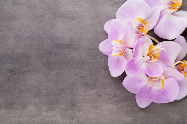 Różowy kwiat orchidei na szarym tle z teksturą, miejsce na tekst.