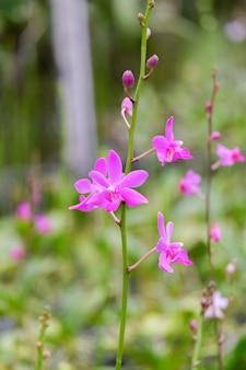 Różowy kwiat orchidei