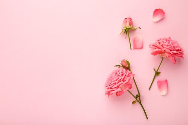 Różowy kwiat róży na różowym tle. koncepcja wiosny. widok z góry