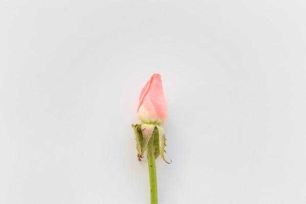 Różowy kwiat róży na stole