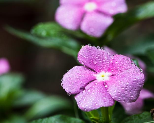 Różowy kwiat rzeżuchy na drzewie w ogrodzie