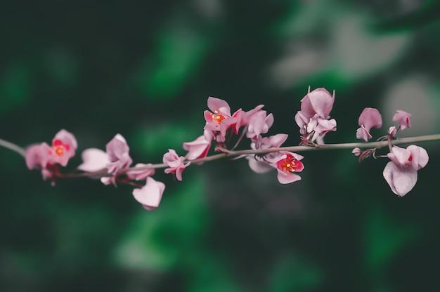 Różowy kwiatu kwitnienie, wiosny natury tapety tło