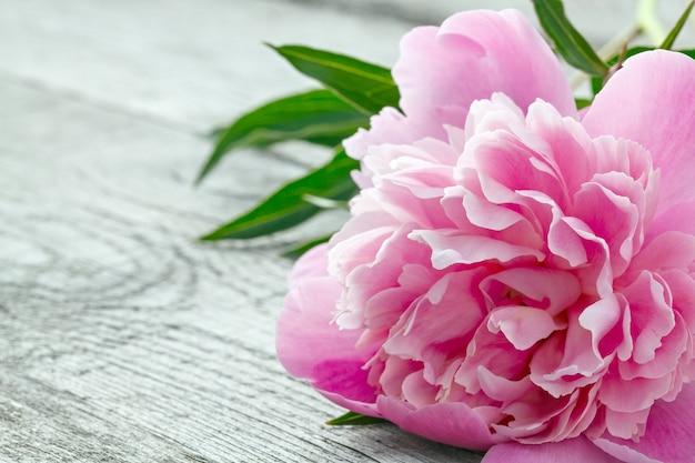 Różowy kwitnący kwiat piwonii na starych deskach z teksturą.