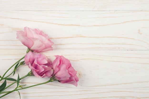 Różowy lisianthus kwitnie na drewnianym tle (eustoma)