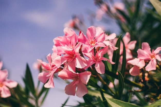 Różowy makro- kwiat na niebie