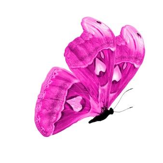 Różowy motyl. naturalny owad. na białym tle