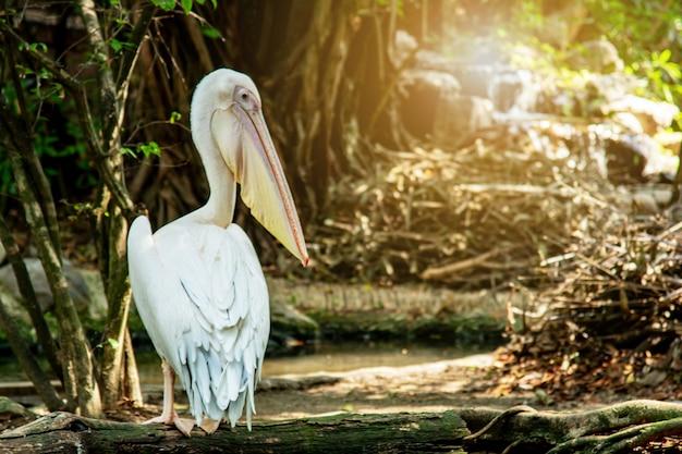 Różowy pelikan na wodzie w dżungli