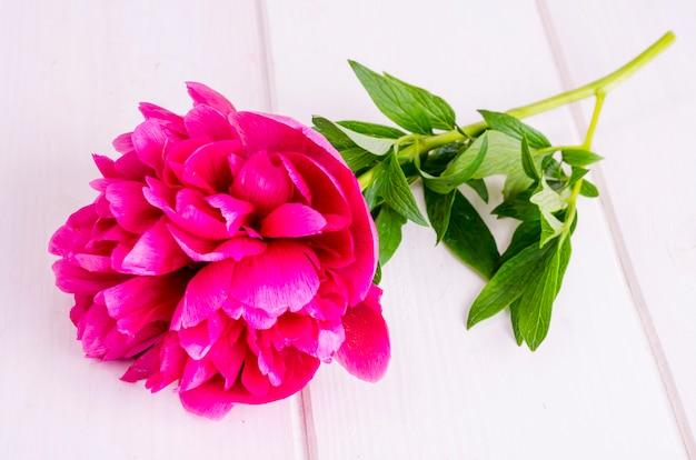 Różowy peonia kwiat na białym drewnianym stole.