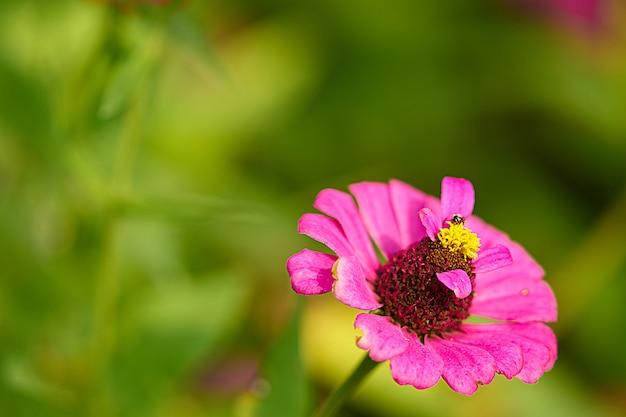 Różowy płatek kwiatu z łodygami pyłków, zamknięty, z pszczołą