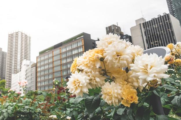 Różowy róża ogród obok autostrady miasta osaka