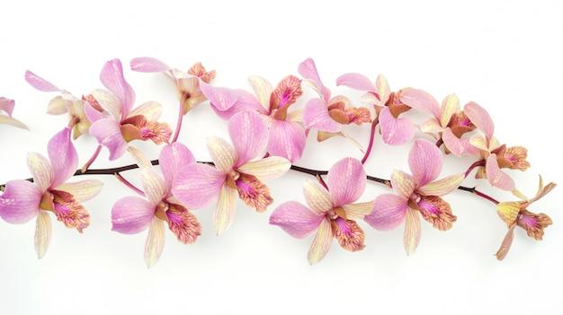 Różowy storczykowy kwiat na białym tle.