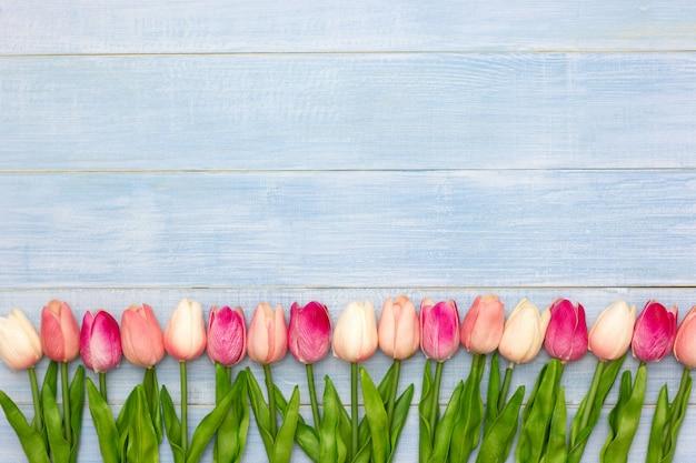 Różowy tulipan kwitnie na błękitnym drewnianym stole.