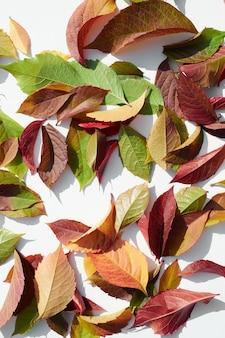 Rozproszone jesienne kolorowe liście wzór na na białym tle