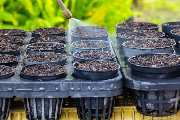 Rozpylanie wody dla sadzonek