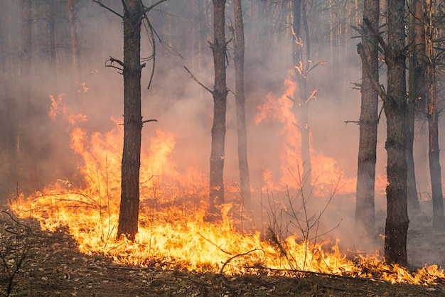 Rozwój pożaru lasu