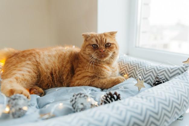 Rudy kot leży na łóżku ozdobionym sylwestrowymi światłami. koncepcja nowego roku i bożego narodzenia.