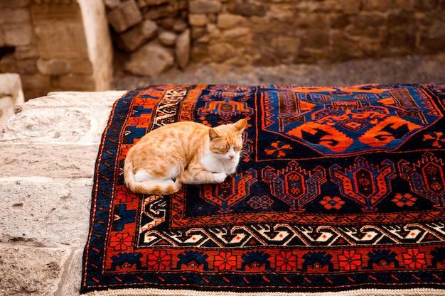 Rudy kot śpi na dywanie