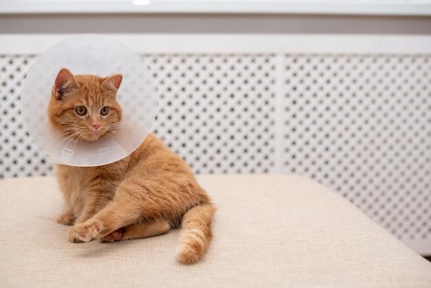 Rudy kot z kołnierzem vet elizabethan leżący na sofie w pokoju