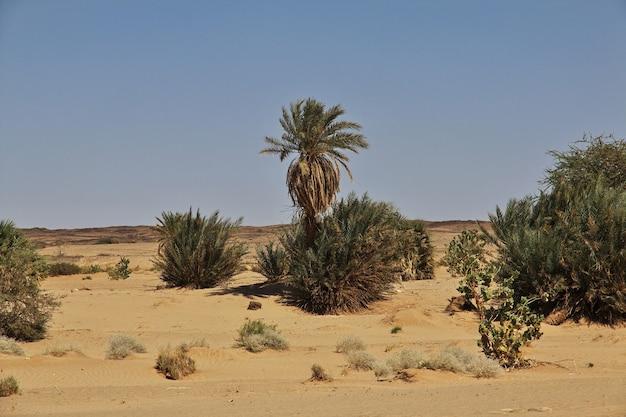 Ruiny starożytnego klasztoru ghazali na saharze w sudanie, afryka