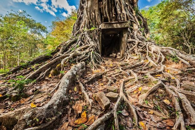 Ruiny świątyni sambor prei kuk, kambodża