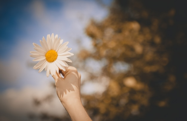 Rumianek na rozmytym tle nieba i lasu, radość i dobry nastrój, symbol miłości.