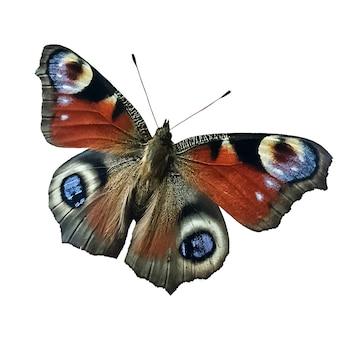 Rusałkowate aglais io motyl linneusza samodzielnie na białym tle