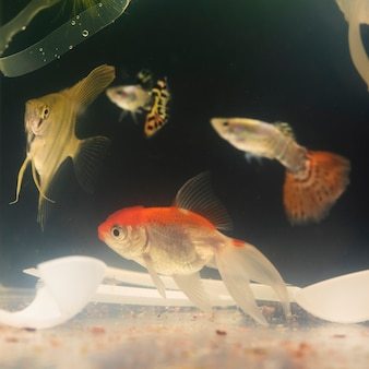 Ryba pływa wśród tworzyw sztucznych