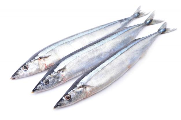 Ryba saury na białym tle