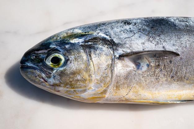 Ryba śródziemnomorska capone lampuga coryphaenna hippurus