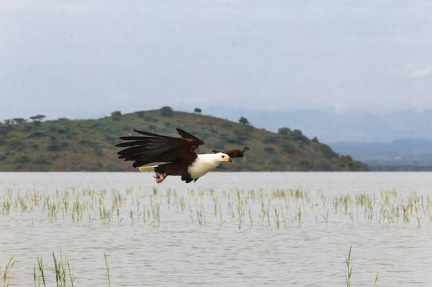 Rybak nad jeziorem eagle baringo lake kenia