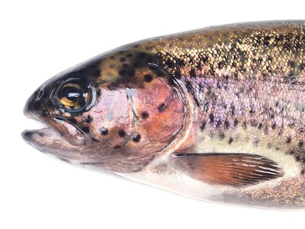 Rybi pstrąg na białym tle