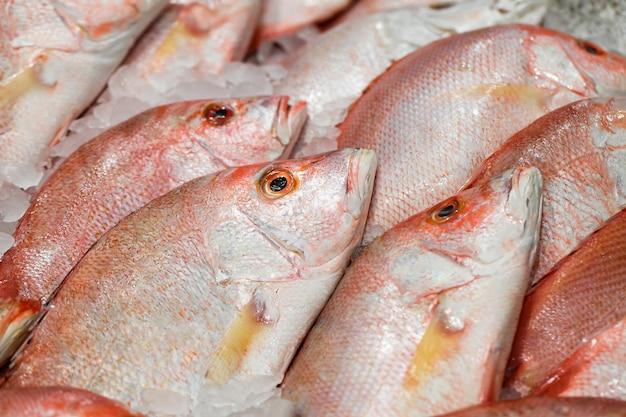 Ryby czerwone surowe zbliżenie w całości, na lodzie są sprzedawane na targu rybnym.