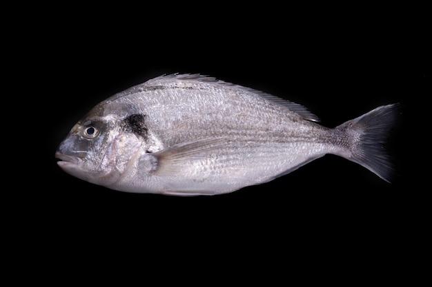 Ryby dorado na czarnym tle, surowe owoce morza