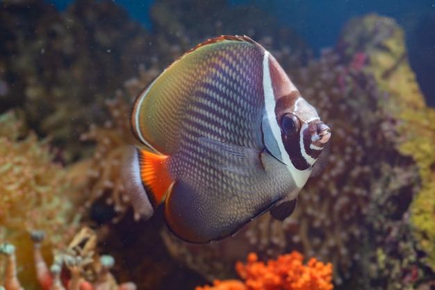 Ryby morskie i piękne korale