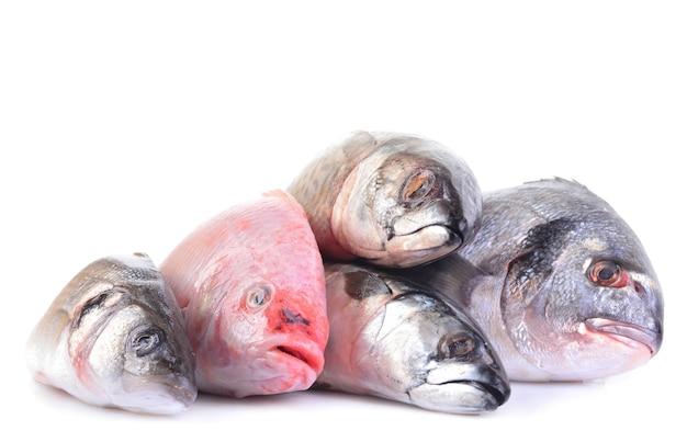 Ryby morskie na białym tle