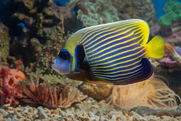 Ryby morskie o pięknych kolorach